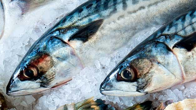 Fornitura pesce per ristoranti: di acqua dolce o salata